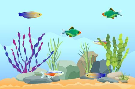 Peces de acuario nadando entre piedras y algas