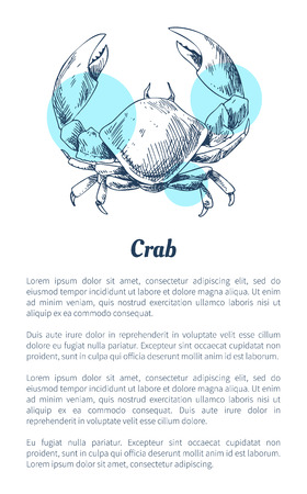 Crab marine creature as common seafood flat vector illustration in sketch style. Nautical information poster on white with blue spots and text sample. Illusztráció