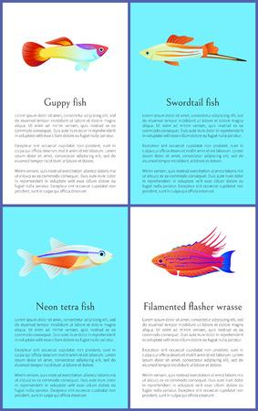 Affiches colorées de vecteur de poissons Guppy et Swordtail Vecteurs