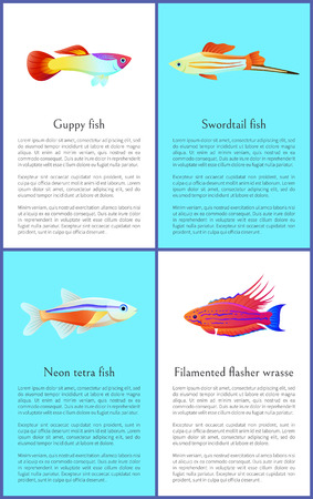 Colorful Guppy and Swordtail Fishes Vector Posters Banco de Imagens - 109854750