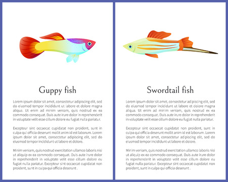 Guppy and Swordtail Fish Isolated on White Icons