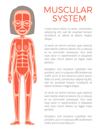 Muscular System of Body Poster Vector Illustration