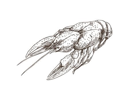 Crayfish Monochrome Sketch Vector Illustration