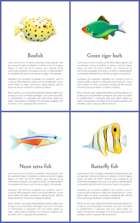 Boxfish and Green Tiger Barb Vector Illustration Çizim