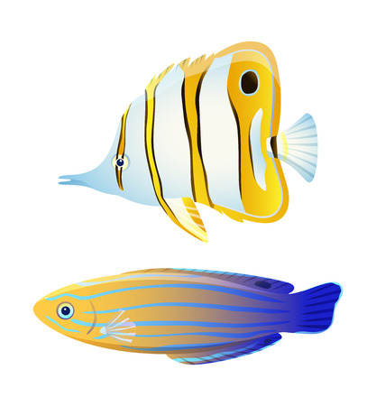 Butterfly fish and blue striped tamarin wrasse Stock Photo