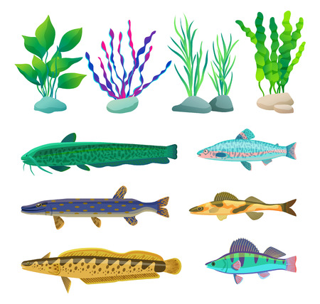 Various Algae and Marine Creatures Illustration
