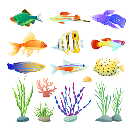 Marine Creatures and Seaweed Illustration on White Stock Photo