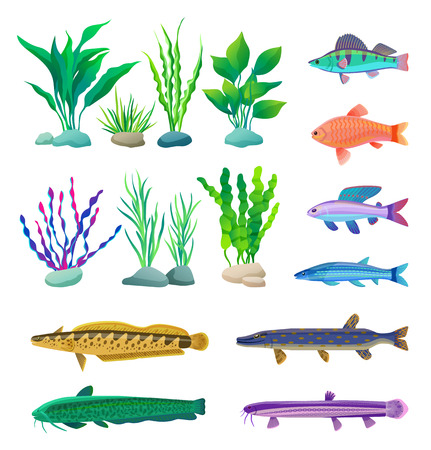 Green and violet, straight and wavy algae type. Different-sized and colored predatory and aquarium fish specie vector illustration, nautical poster.
