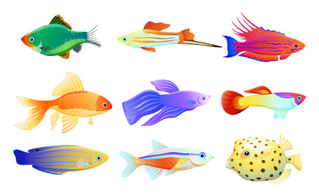 Common and rare different coloration and size aquarium inhabitant specie. Goldfish and tamarin wrasse, boxfish and tetra neon vector illustration.