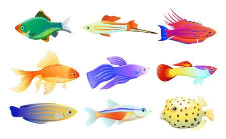 Specie di abitanti dell'acquario di diverse colorazioni e dimensioni comuni e rare. Goldfish e tamarin wrasse, boxfish e tetra neon illustrazione vettoriale. Vettoriali