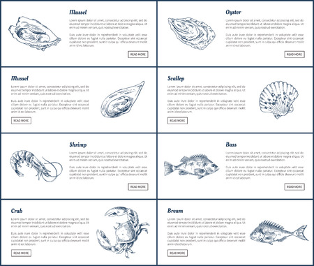 Mussel and oyster posters set. Scallop shell and marine dwellers shrimp. Bass fish bream and crab with headlines and text sample vector illustration Çizim
