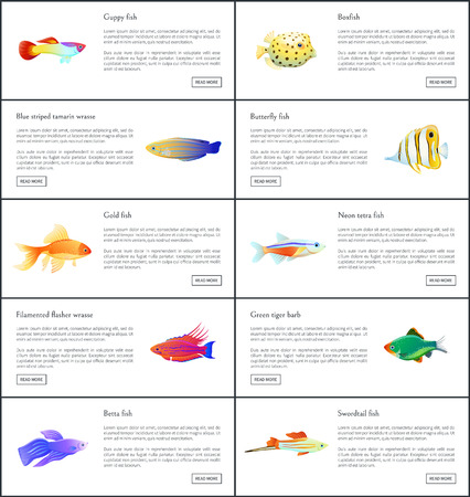 Marine fishes collection color vector illustration of boxfish guppy golden and neon tetra with colorful wrasses, isolated on white aquatic citizen set Illustration