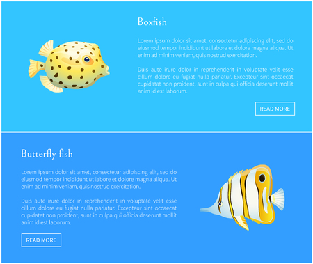 Butterfly fish and boxfish posters set, Fish with long nose and striped pattern. Dotted creature of marine life round shape on vector illustration