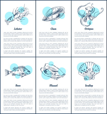 Bass fish and octopus set. Marine dwellers scallop and mussel, lobster with claws, scallop posters with informational text sample vector illustration Illustration