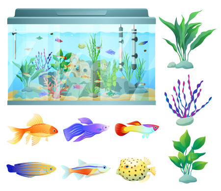 Aquarium in Glass Container Vector Illustration
