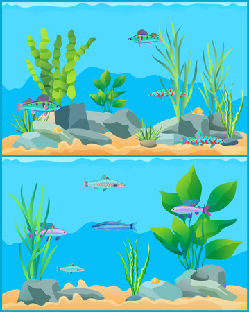 Colorful aquarium fishes in blue water promo poster. Multicolored sea animals, green water plants and bottom stones flat cartoon vector illustration.
