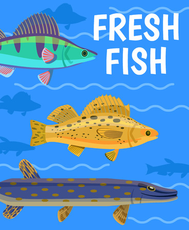 Common predatory pike, zander and perch color vector illustration on cartoon aquarium background with fresh fish text. Funny nautical marine poster Zdjęcie Seryjne - 110797106