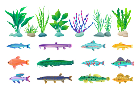 Various Algae and Marine Creatures Illustration