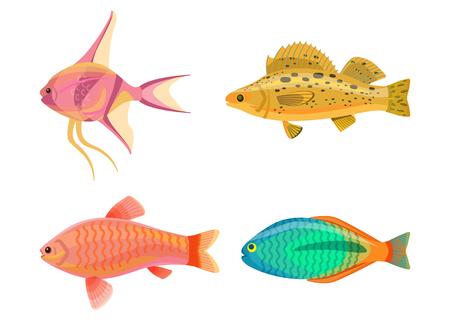 Jewel Cichlid and Fish Set Vector Illustration