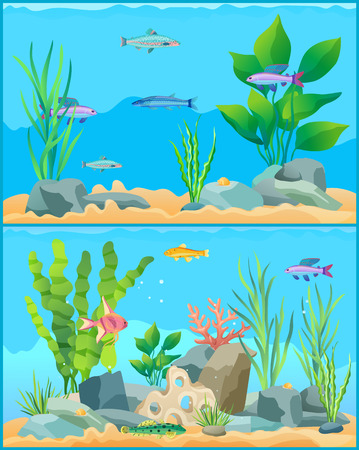 Colorful Cartoon Aquarium Fishes Set Promo Poster Stock Photo - 111003407