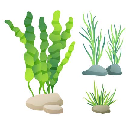 Ensemble d'illustrations de couleurs de types d'algues de mer ou d'aquarium