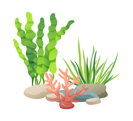 Stones and Vegetation Set Vector Illustration
