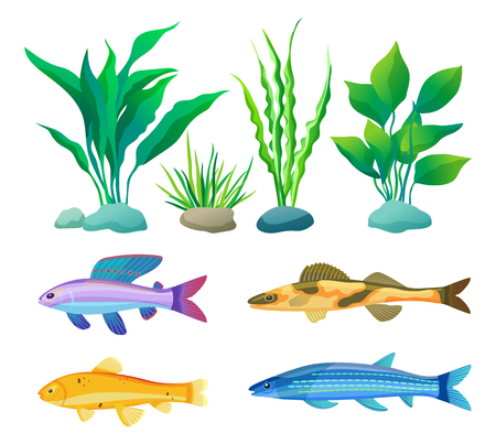 Aquarium Fish and Decorative Algae Color Poster 版權商用圖片