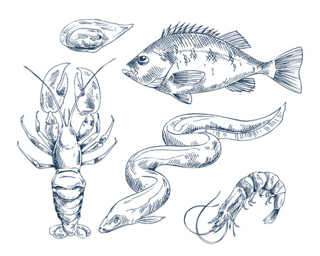 Sea Inhabitant Illustration for Seafood Restaurant