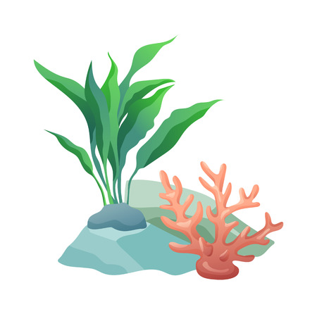 Aquarium stone and plants to decorate container with water. Decorative elements natural items. Marine and ocean flora foliage vector illustration
