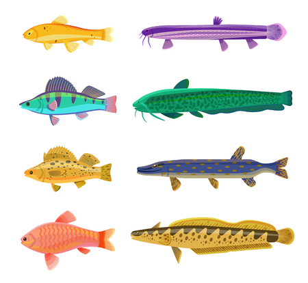 Jack Dempsey and cichlid fish set. Marine and ocean dwellers with spots on body, gills and vents. Limbless animals isolated on vector illustration