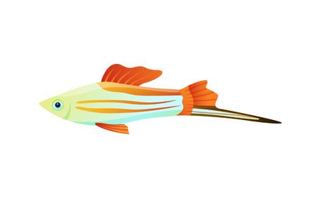 Colorful Swordtail Fish Color Vector Illustration