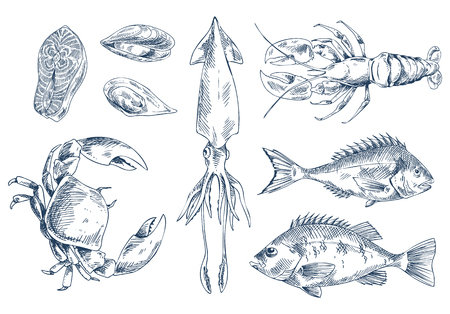 Sea Delicacy Vector Illustration Sketch Style Set Illusztráció