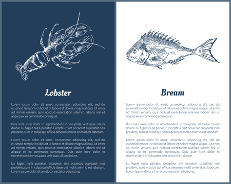 Lobster and Bream Fish Posters Vector Illustration