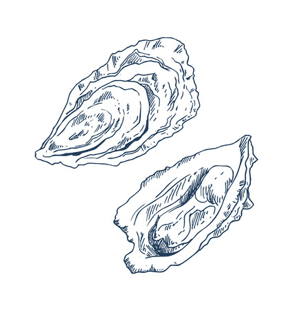 Seafood delicacy bivalve clam oyster monochrome hand drawn vector illustration. Marine product for fish restaurant promo poster isolated on white.