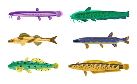 Brook trout fish fauna set. Species types of limbless animals with eyes, spots on body and fins. Vertebrate creature isolated on vector illustration