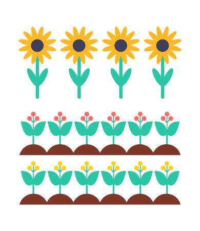 Sunflower and Berry Bush on Garden Bed Vector Set Çizim
