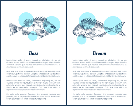 Bass and bream fish posters with headlines, text sample. Limbless cold-blooded vertebrate animal monochrome sketches outline, vector illustration Illustration