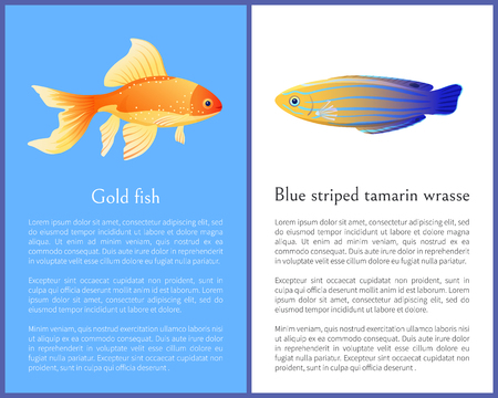 Gold fish and blue striped tamarin wrasse icons. Freshwater aquarium pets on blue and white color background in cartoon style vector illustration Illustration