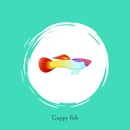 Aquarium Guppy fish poster with cutline. Marine creature color cartoon flat vector illustration in centre of white bubble spot on blue background.
