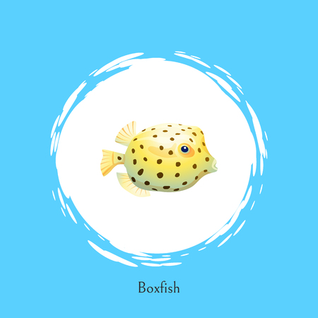 Boxfish animal poster set headline and circle. Fish of rounded shape with fins and dotted pattern on skin floating isolated on vector illustration
