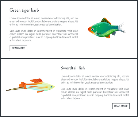 Green tiger barb, swordtail fish isolated on white. Freshwater aquarium fish silhouette icon on blank background in cartoon style vector illustration