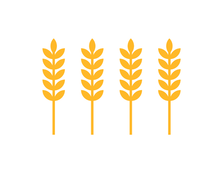 Ear of wheat icons closeup set spica rural culture. Cereal plant growing on farms in countrysides. Agricultural grain, ingredient to make bread vector
