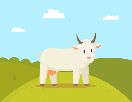 Goat stroll on glade colorful vector illustration, image of white animal with round horns and udder, domestic pet walk on rural land, cute landscape