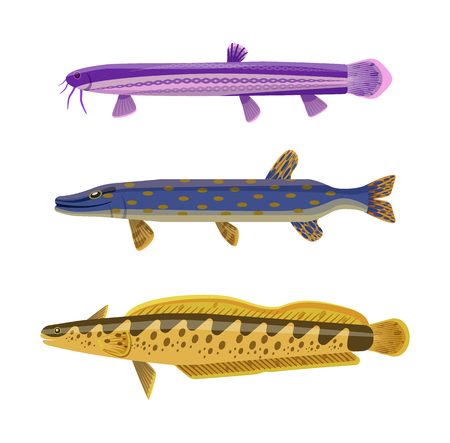 Brook and rainbow tout long fish set. Animals with spots on body and typical shape. Limbless animals water dwellers isolated on vector illustration