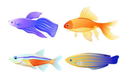 Illustration vectorielle de couleur d'espèce de poisson nautique Vecteurs