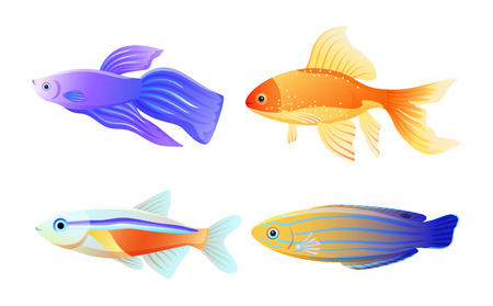 Nautical Fish Specie Color Vector Illustration