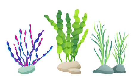 Seaweed for aquarium sketch vector Illustration