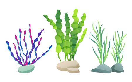 Seaweed for aquarium sketch vector Illustration