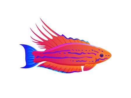 Filamented Flasher Wrasse Exotic Ocean Fish Banner