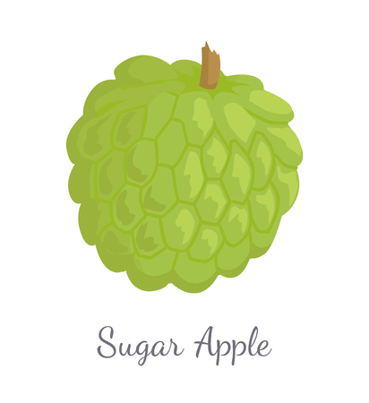 Sugar-apple, sweetsop, or custard apple, Annona squamosa, exotic juicy fruit vector isolated. Tropical edible food, dieting vegetarian icon with text
